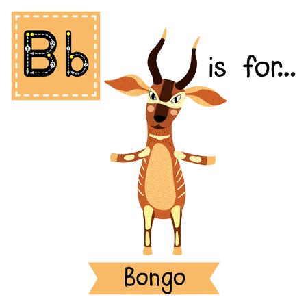 flash card: B letter tracing. Bongo standing on two legs. Cute children zoo alphabet flash card. Funny cartoon animal. Kids abc education. Learning English vocabulary. Vector illustration.