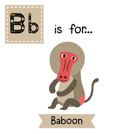 learning english: B letter tracing. Sitting Baboon. Cute children zoo alphabet flash card. Funny cartoon animal. Kids abc education. Learning English vocabulary. Vector illustration.