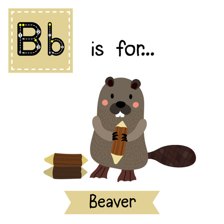 cute children: B letter tracing. A standing Beaver holding a log. Cute children zoo alphabet flash card. Funny cartoon animal. Kids abc education. Learning English vocabulary. Vector illustration.