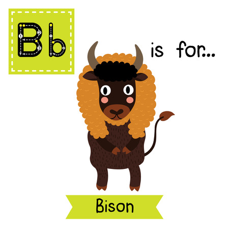 flash card: B letter tracing. Bison standing on two legs. Cute children zoo alphabet flash card. Funny cartoon animal. Kids abc education. Learning English vocabulary. Vector illustration.