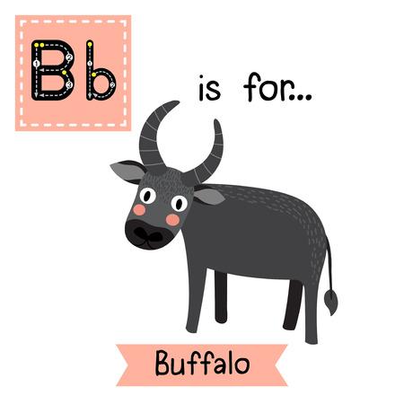 az: B letter tracing. Standing Buffalo. Cute children zoo alphabet flash card. Funny cartoon animal. Kids abc education. Learning English vocabulary. Vector illustration.