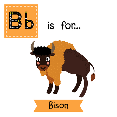 flash card: B letter tracing. Bison. Cute children zoo alphabet flash card. Funny cartoon animal. Kids abc education. Learning English vocabulary. Vector illustration.