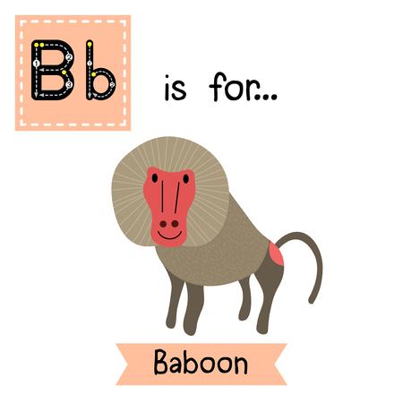 baboon: B letter tracing. Baboon. Cute children zoo alphabet flash card. Funny cartoon animal. Kids abc education. Learning English vocabulary. Vector illustration. Illustration