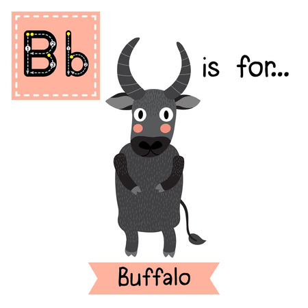 flash card: B letter tracing. Buffalo standing on two legs. Cute children zoo alphabet flash card. Funny cartoon animal. Kids abc education. Learning English vocabulary. Vector illustration.