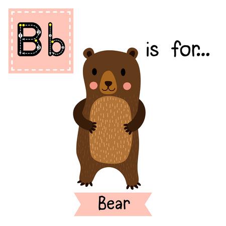 flash card: B letter tracing. Standing Bear. Cute children zoo alphabet flash card. Funny cartoon animal. Kids abc education. Learning English vocabulary. Vector illustration.