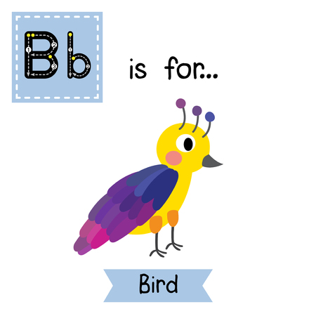 flash card: B letter tracing. Standing colorful Bird. Cute children zoo alphabet flash card. Funny cartoon animal. Kids abc education. Learning English vocabulary. Vector illustration.