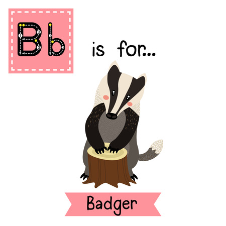 learning english: B letter tracing. Standing Badger. Cute children zoo alphabet flash card. Funny cartoon animal. Kids abc education. Learning English vocabulary. Vector illustration. Illustration
