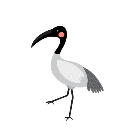 wade: Ibis bird animal cartoon character. Isolated on white background. Vector illustration.