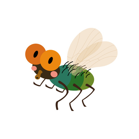 housefly: Fly animal cartoon character. Isolated on white background. Vector illustration.