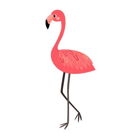 wade: Standing Flamingo animal cartoon character. Isolated on white background. Vector illustration.