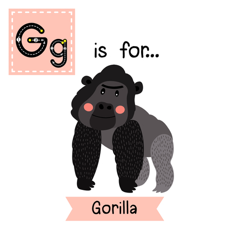 learning english: G letter tracing. Gorilla. Cute children zoo alphabet flash card. Funny cartoon animal. Kids abc education. Learning English vocabulary. Vector illustration.