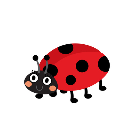coccinellidae: Ladybird animal cartoon character. Isolated on white background. Vector illustration. Illustration