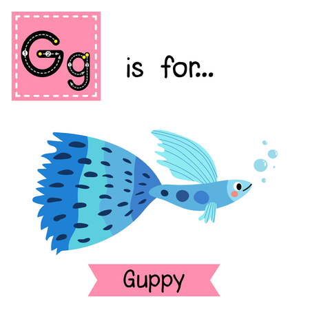 learning english: G letter tracing. Blue Guppy fish. Cute children zoo alphabet flash card. Funny cartoon animal. Kids abc education. Learning English vocabulary. Vector illustration. Illustration