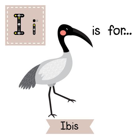 i kids: I letter tracing. Ibis bird. Cute children zoo alphabet flash card. Funny cartoon animal. Kids abc education. Learning English vocabulary. Vector illustration.