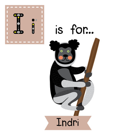 I letter tracing. Indri climbing a tree. Cute children zoo alphabet flash card. Funny cartoon animal. Kids abc education. Learning English vocabulary. Vector illustration.
