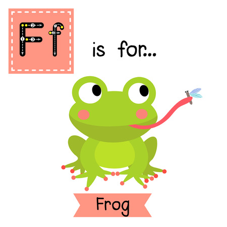 croaking: F letter tracing. Frog eating fly Cute children zoo alphabet flash card. Funny cartoon animal. Kids abc education. Learning English vocabulary. Vector illustration.