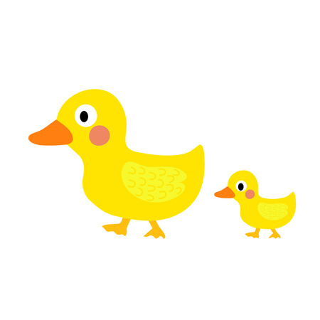 anatidae: Duck and little duck animal cartoon character. Isolated on white background. Vector illustration.