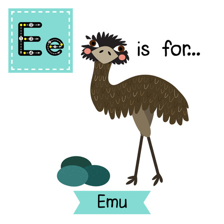 emu: E letter tracing. Standing Emu with eggs. Cute children zoo alphabet flash card. Funny cartoon animal. Kids abc education. Learning English vocabulary. Vector illustration.