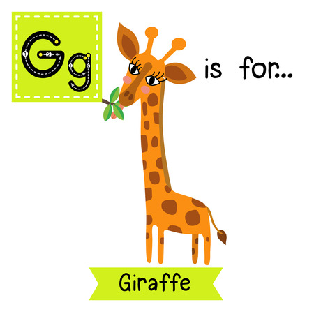 az: G letter tracing. Giraffe eating leaves. Cute children zoo alphabet flash card. Funny cartoon animal. Kids abc education. Learning English vocabulary. Vector illustration.