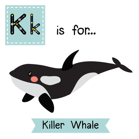 cetacea: K letter tracing. Killer whale orca. Cute children zoo alphabet flash card. Funny cartoon animal. Kids abc education. Learning English vocabulary. Vector illustration.