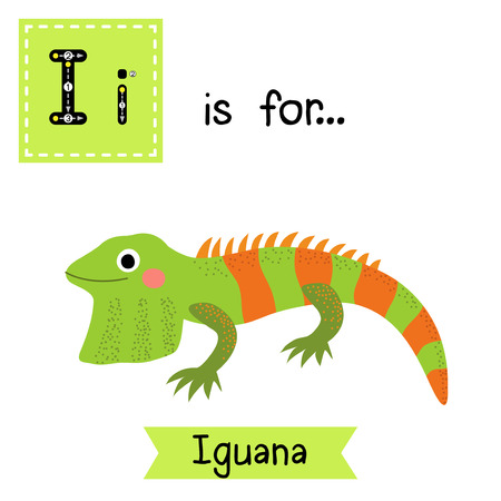 learning english: I letter tracing. Iguana lizard reptile. Cute children zoo alphabet flash card. Funny cartoon animal. Kids abc education. Learning English vocabulary. Vector illustration.