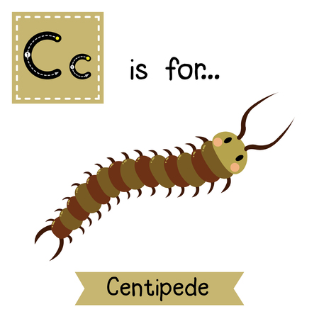 centipede: C letter tracing. Centipede. Cute children zoo alphabet flash card. Funny cartoon animal. Kids abc education. Learning English vocabulary. Vector illustration. Illustration