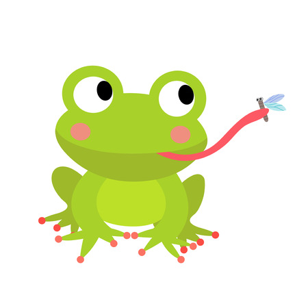 croaking: Frog eating fly animal cartoon character. Isolated on white background. Vector illustration.