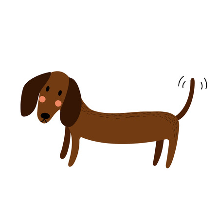 dachshund: Dachshund animal cartoon character. Isolated on white background. Vector illustration.
