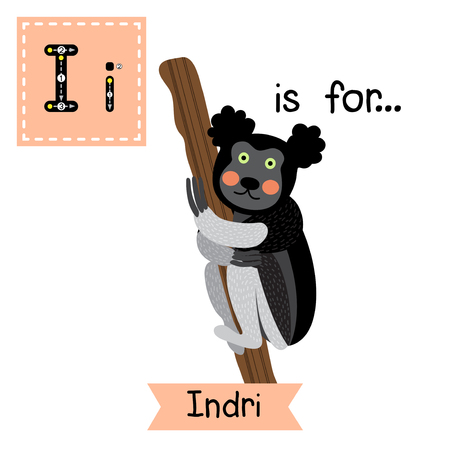 i kids: I letter tracing. Indri climbing a tree. Cute children zoo alphabet flash card. Funny cartoon animal. Kids abc education. Learning English vocabulary. Vector illustration.