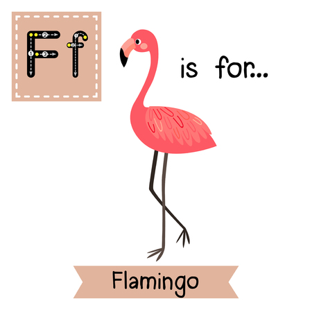 flash card: F letter tracing. Standing Flamingo. Cute children zoo alphabet flash card. Funny cartoon animal. Kids abc education. Learning English vocabulary. Vector illustration.