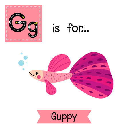 learning english: G letter tracing. Pink Guppy fish. Cute children zoo alphabet flash card. Funny cartoon animal. Kids abc education. Learning English vocabulary. Vector illustration.