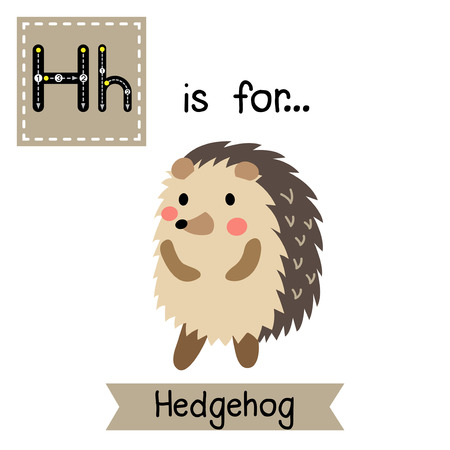 learning english: H letter tracing. Hedgehog standing on two legs Cute children zoo alphabet flash card. Funny cartoon animal. Kids abc education. Learning English vocabulary. Vector illustration.