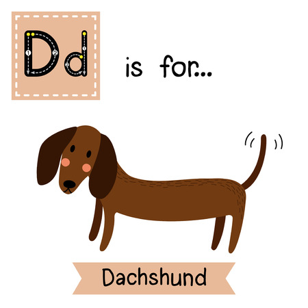 flash card: D letter tracing. Dachshund. Cute children zoo alphabet flash card. Funny cartoon animal. Kids abc education. Learning English vocabulary. Vector illustration.