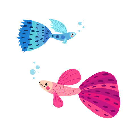 Blue and pink Guppy fish animal cartoon character. Isolated on white background. Vector illustration. Illustration