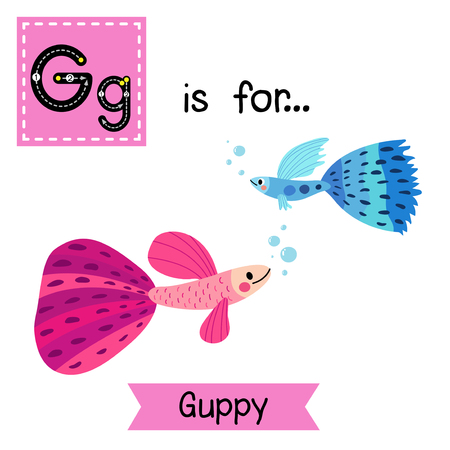 flash card: G letter tracing. Blue and pink Guppy fish. Cute children zoo alphabet flash card. Funny cartoon animal. Kids abc education. Learning English vocabulary. Vector illustration.