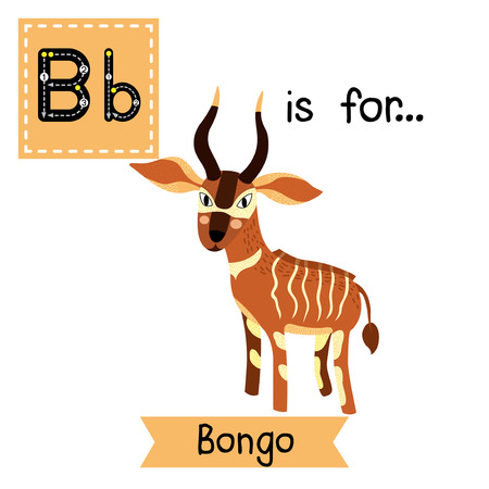 flash card: B letter tracing. Standing Bongo. Cute children zoo alphabet flash card. Funny cartoon animal. Kids abc education. Learning English vocabulary. Vector illustration.