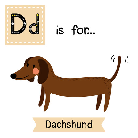 learning english: D letter tracing. Dachshund. Cute children zoo alphabet flash card. Funny cartoon animal. Kids abc education. Learning English vocabulary. Vector illustration.