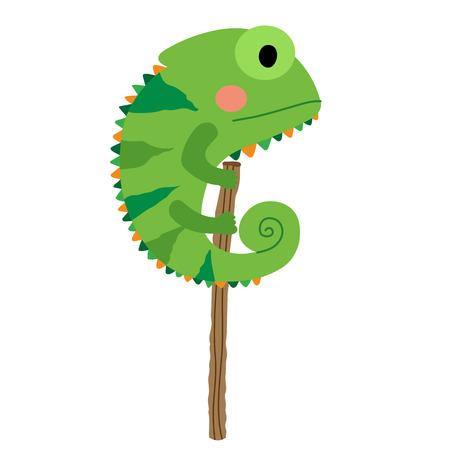 chamaeleo: Green Chameleon animal cartoon character. Isolated on white background. illustration.