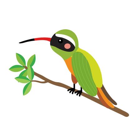 Xantus Colibrí que se encarama personaje de dibujos animados de los animales rama. Aislado en el fondo blanco. ilustración.