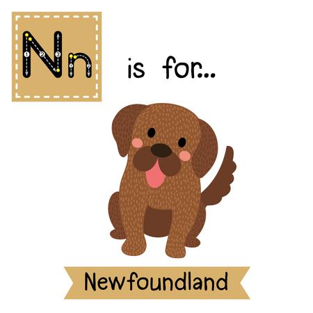 newfoundland: N letter tracing. Sitting Newfoundland dog. Cute children zoo alphabet flash card. Funny cartoon animal. Kids abc education. Learning English vocabulary. illustration.