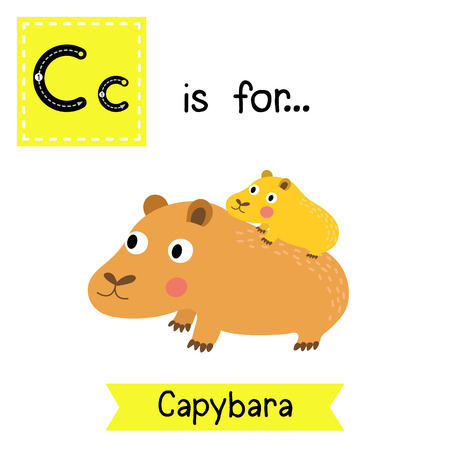 C letter tracing. Capybara mother and child. Cute children zoo alphabet flash card. Funny cartoon animal. Kids abc education. Learning English vocabulary. illustration.