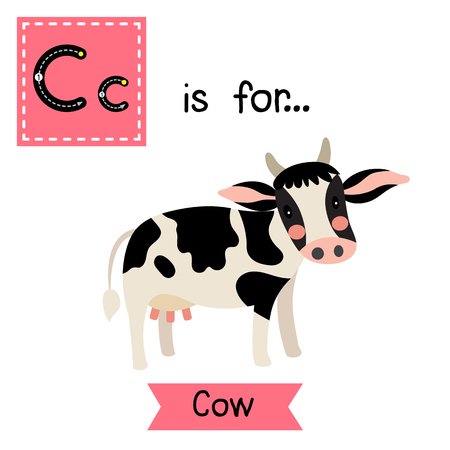 holstein: C letter tracing. Happy Holstein Cow. Cute children zoo alphabet flash card. Funny cartoon animal. Kids abc education. Learning English vocabulary. illustration. Illustration