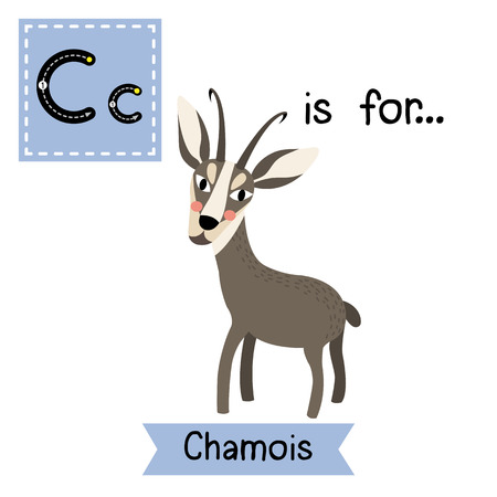 C letter tracing. Standing Chamois. Cute children zoo alphabet flash card. Funny cartoon animal. Kids abc education. Learning English vocabulary. illustration. Illustration