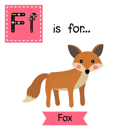 F letter tracing. Standing Fox. Cute children zoo alphabet flash card. Funny cartoon animal. Kids abc education. Learning English vocabulary. illustration.