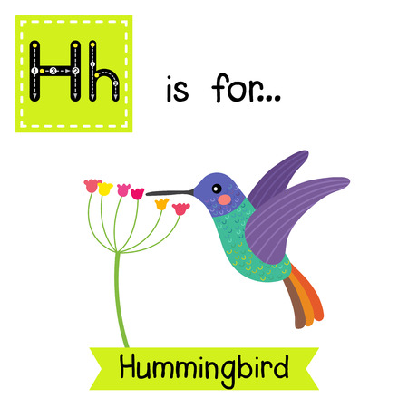 H letter tracing. Golden tailed sapphire Hummingbird getting nectar from a flower. Cute children zoo alphabet flash card. Funny cartoon animal. Kids abc education. Learning English vocabulary. illustration.