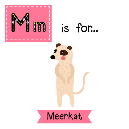 M letter tracing. Standing Meerkat. Cute children zoo alphabet flash card. Funny cartoon animal. Kids abc education. Learning English vocabulary. illustration. Illustration