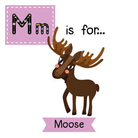 cute children: M letter tracing. Standing Moose. Cute children zoo alphabet flash card. Funny cartoon animal. Kids abc education. Learning English vocabulary. illustration.