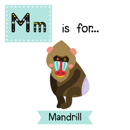 mandrill: M letter tracing. Sitting Mandrill. Cute children zoo alphabet flash card. Funny cartoon animal. Kids abc education. Learning English vocabulary. illustration.