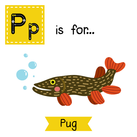 pike: P letter tracing. Pike fish. Cute children zoo alphabet flash card. Funny cartoon animal. Kids abc education. Learning English vocabulary. illustration.