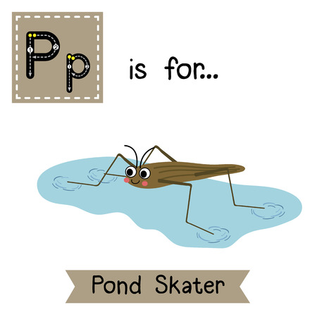 P letter tracing. Pond Skater. Cute children zoo alphabet flash card. Funny cartoon animal. Kids abc education. Learning English vocabulary. illustration.